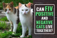 Can FIV Positive And Negative Cats Live Together?