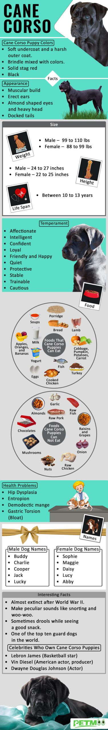 Cane Corso Infographic