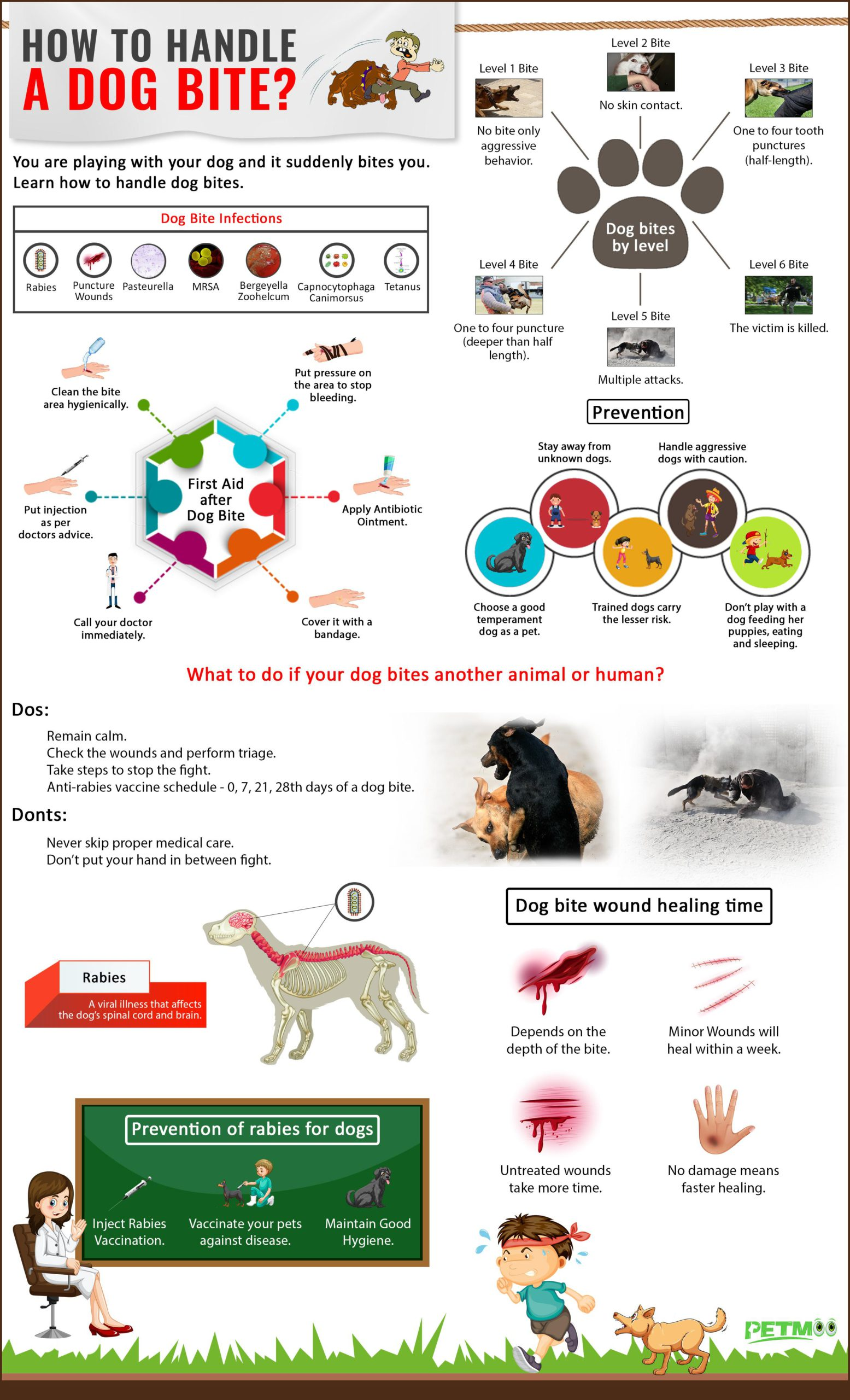 Dog Bite Infographics
