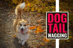 Dog Tail Wagging