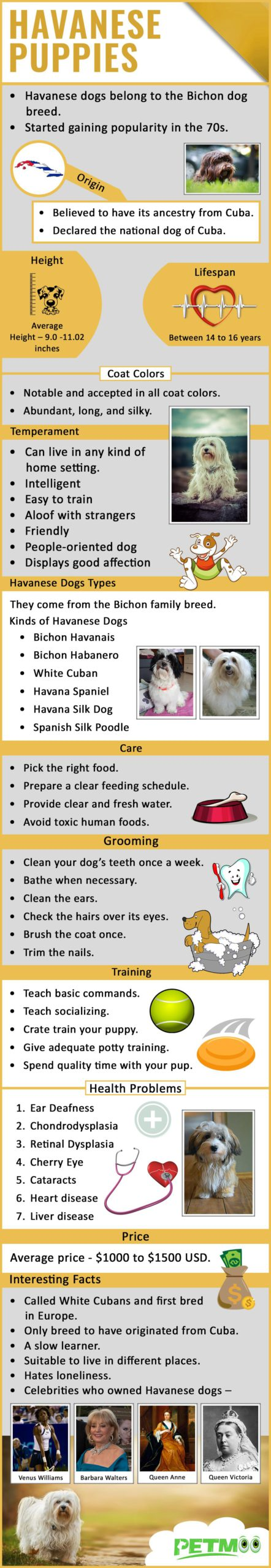 Havanese Puppies Infographic