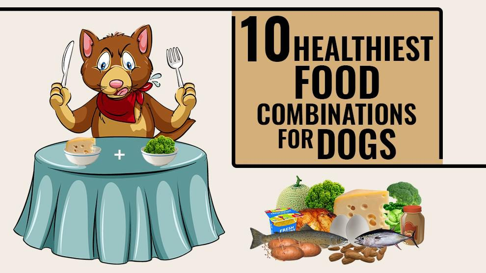 Healthiest Food Combinations For Dogs