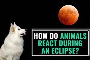 How Do Animals React During An Eclipse?