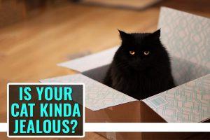 Is Your Cat Kinda Jealous?