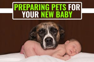 Preparing Pets For Your New Baby