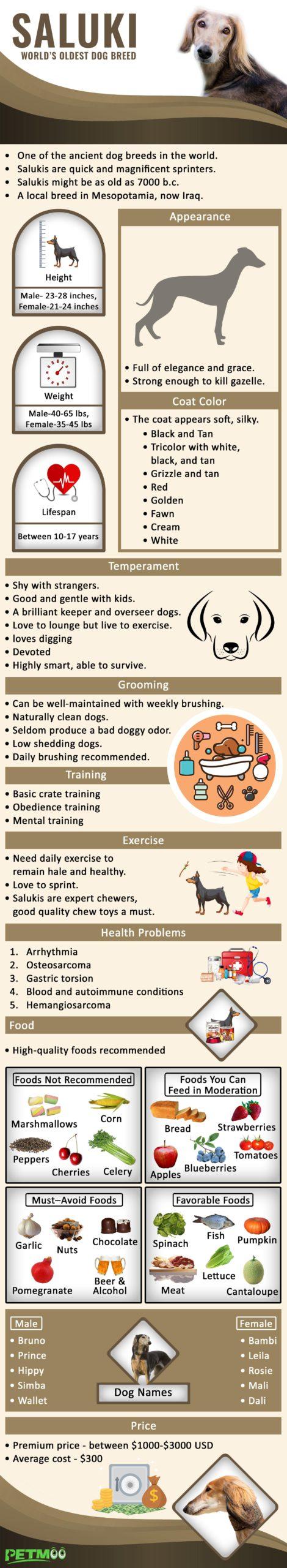 Saluki Infographic