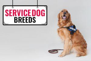 Service Dog Breeds