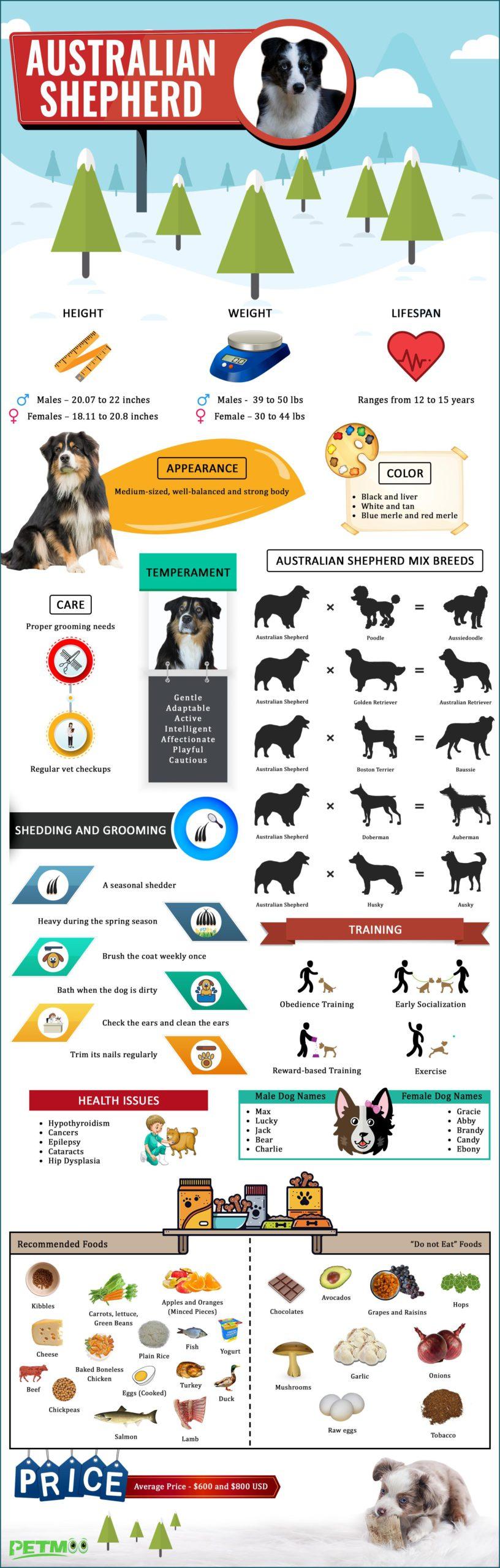 Australian Shepherd Infographics