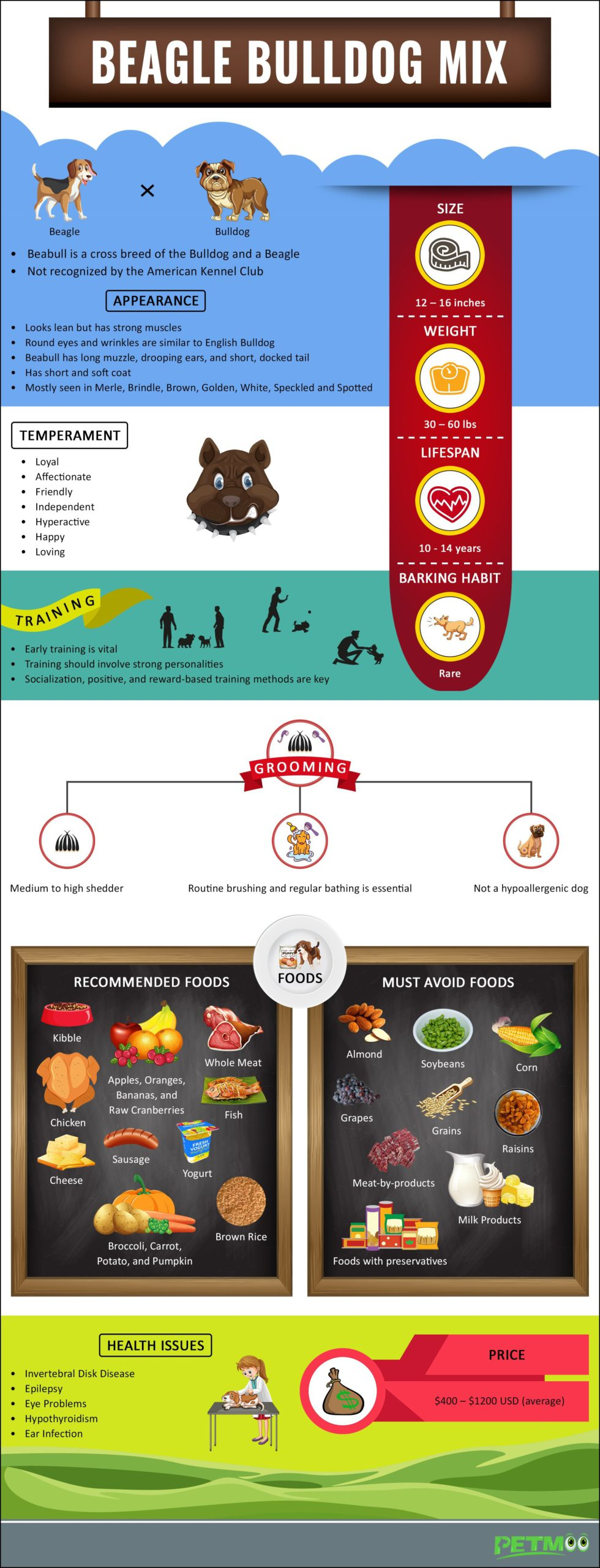 Beagle Bulldog Mix Infographic