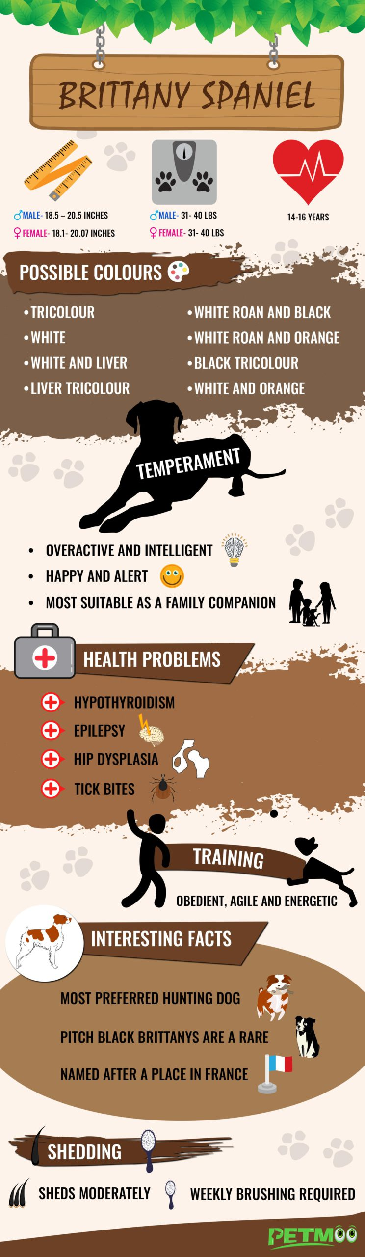 Brittany Spaniel Infographic