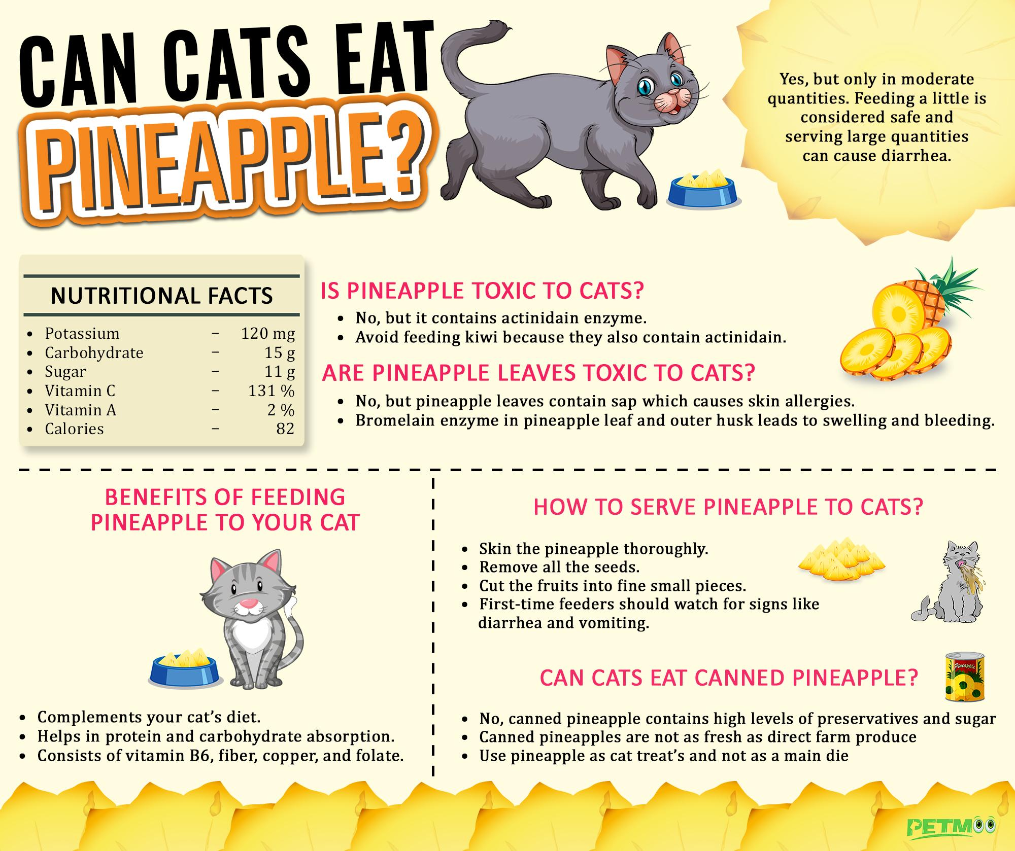 Can Cats Eat Pineapple Infographics
