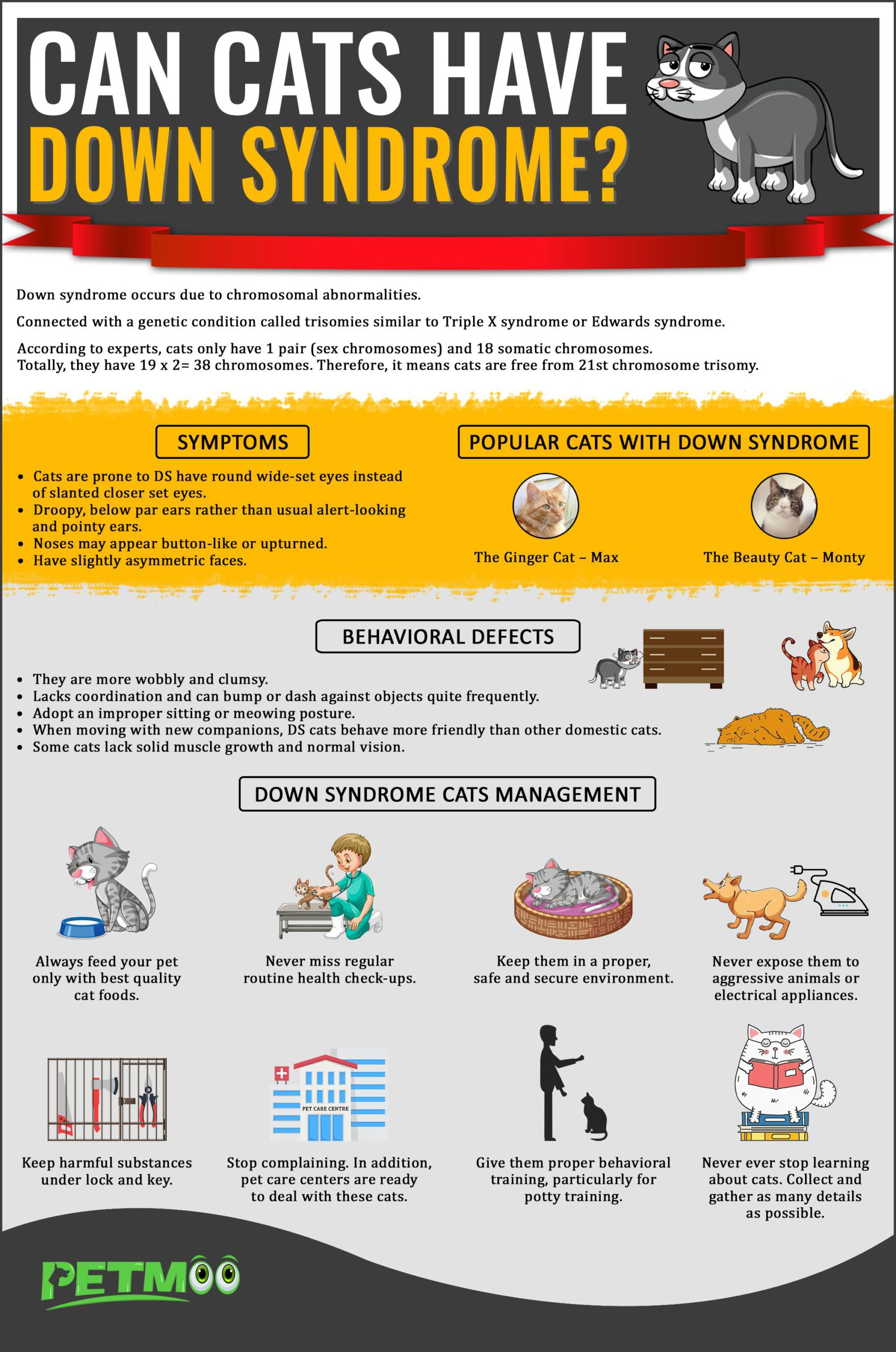 Can Cats Have Down Syndrome Infographics