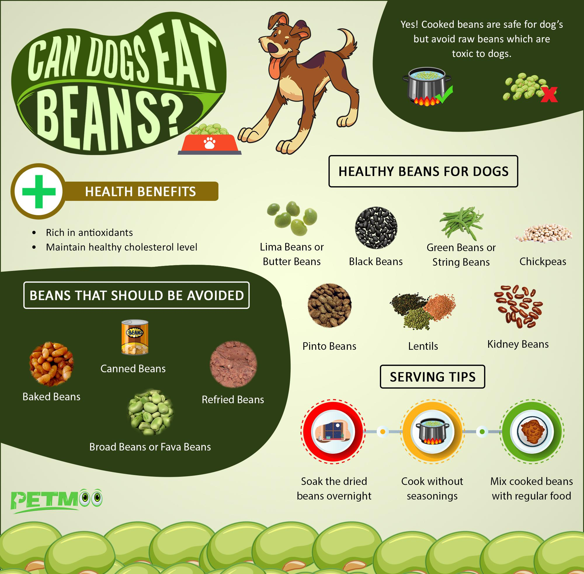 Can Dogs Eat Beans Infographics