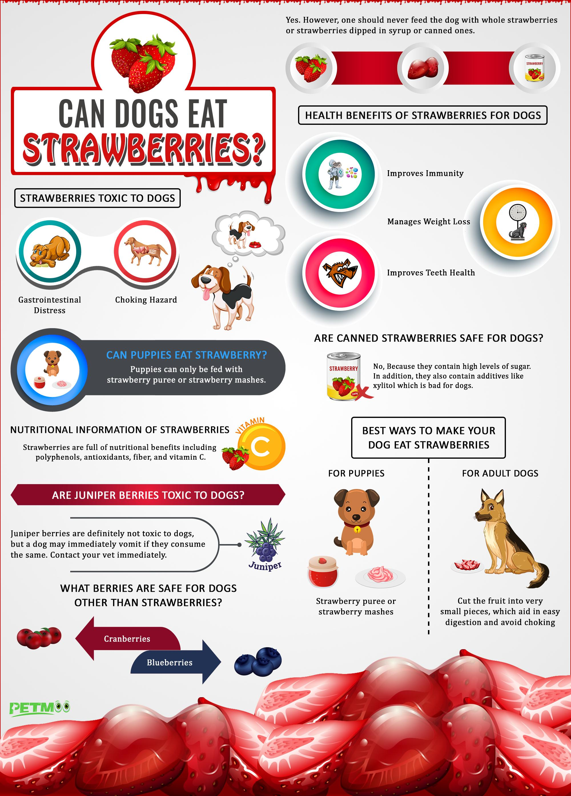 Can Dogs Eat Strawberries Infographic