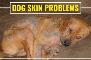 Dog Skin Problems
