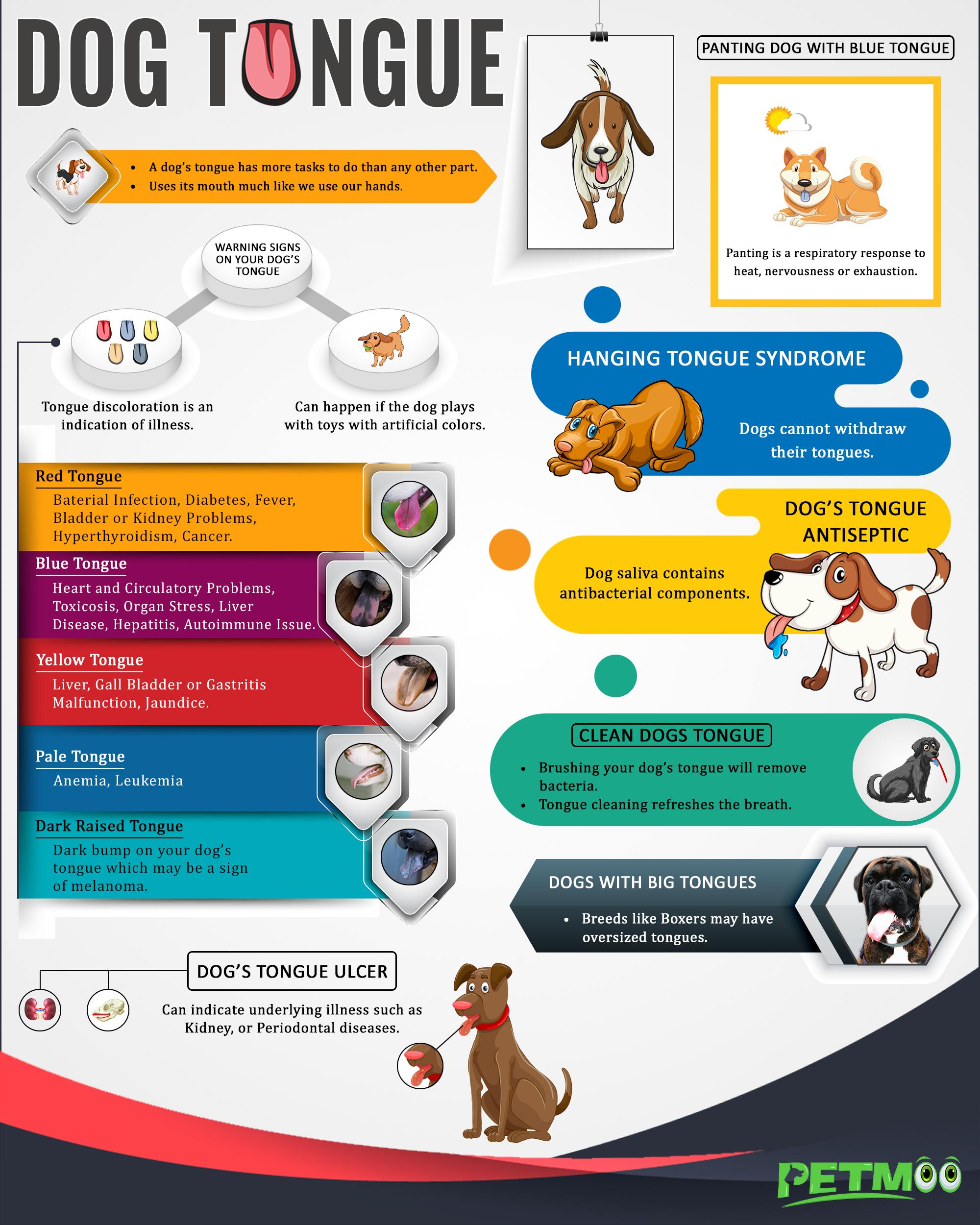 Dog Tongue Infographic
