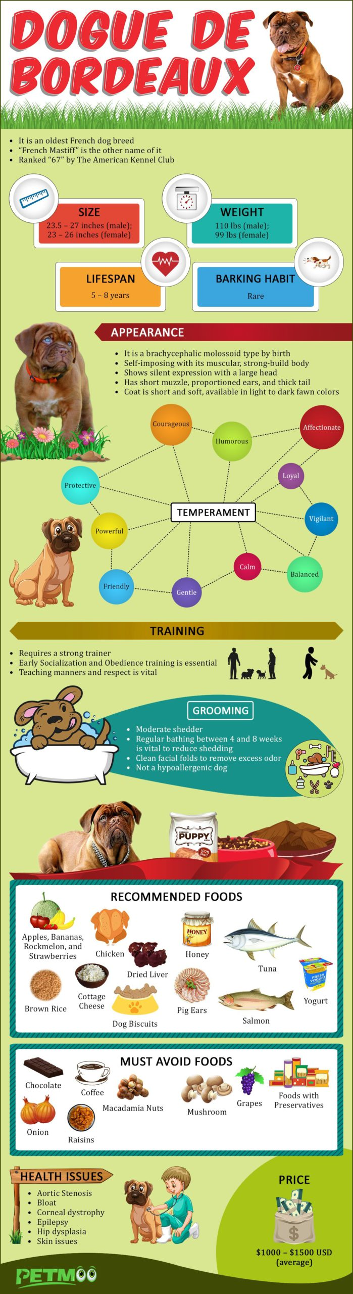 Dogue de Bordeaux Infographics