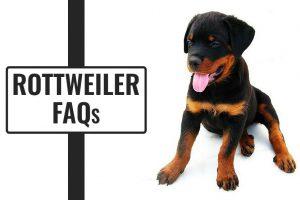 Rottweiler FAQs
