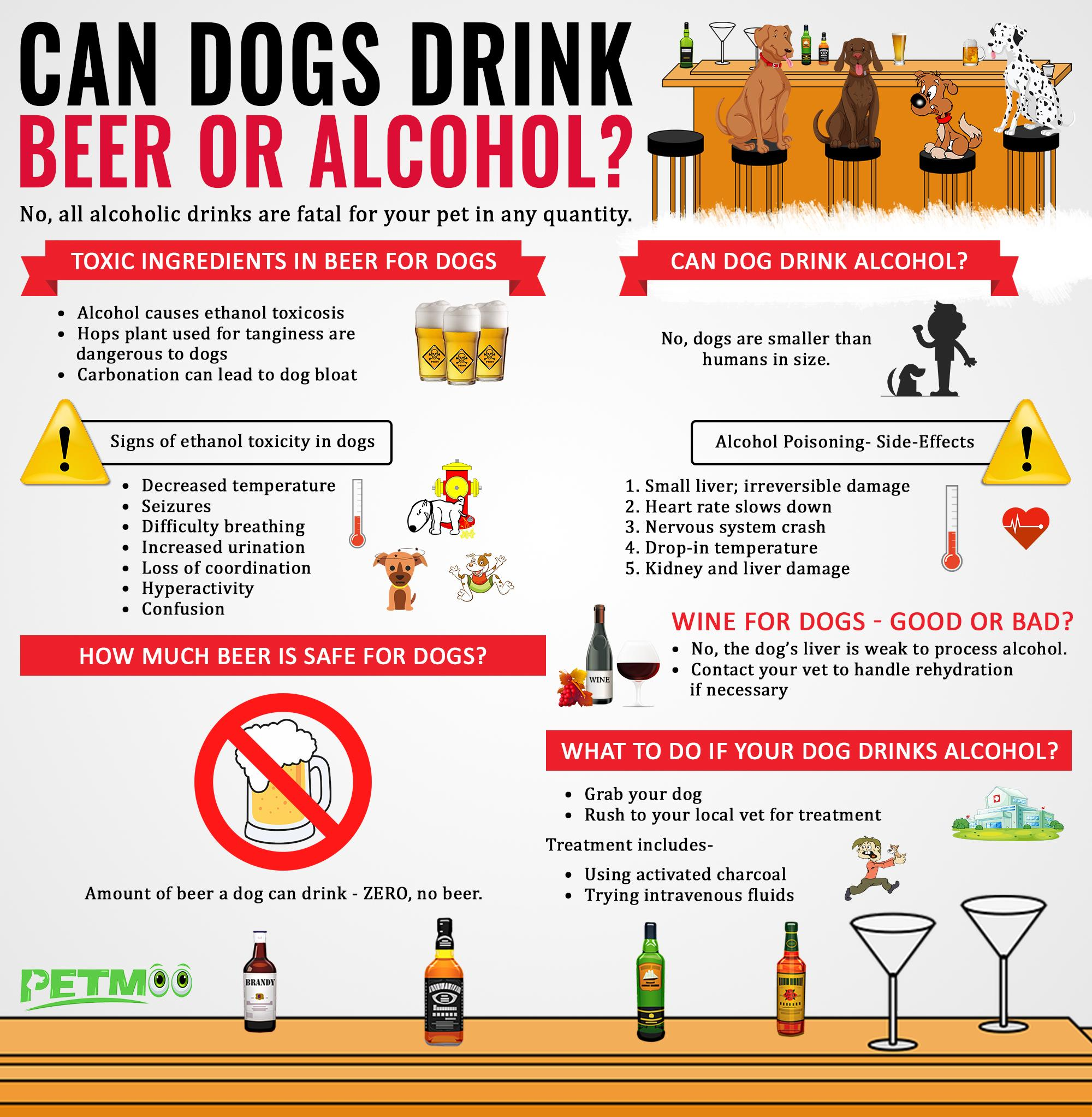 Can Dogs Drink Beer or Alcohol Infographics
