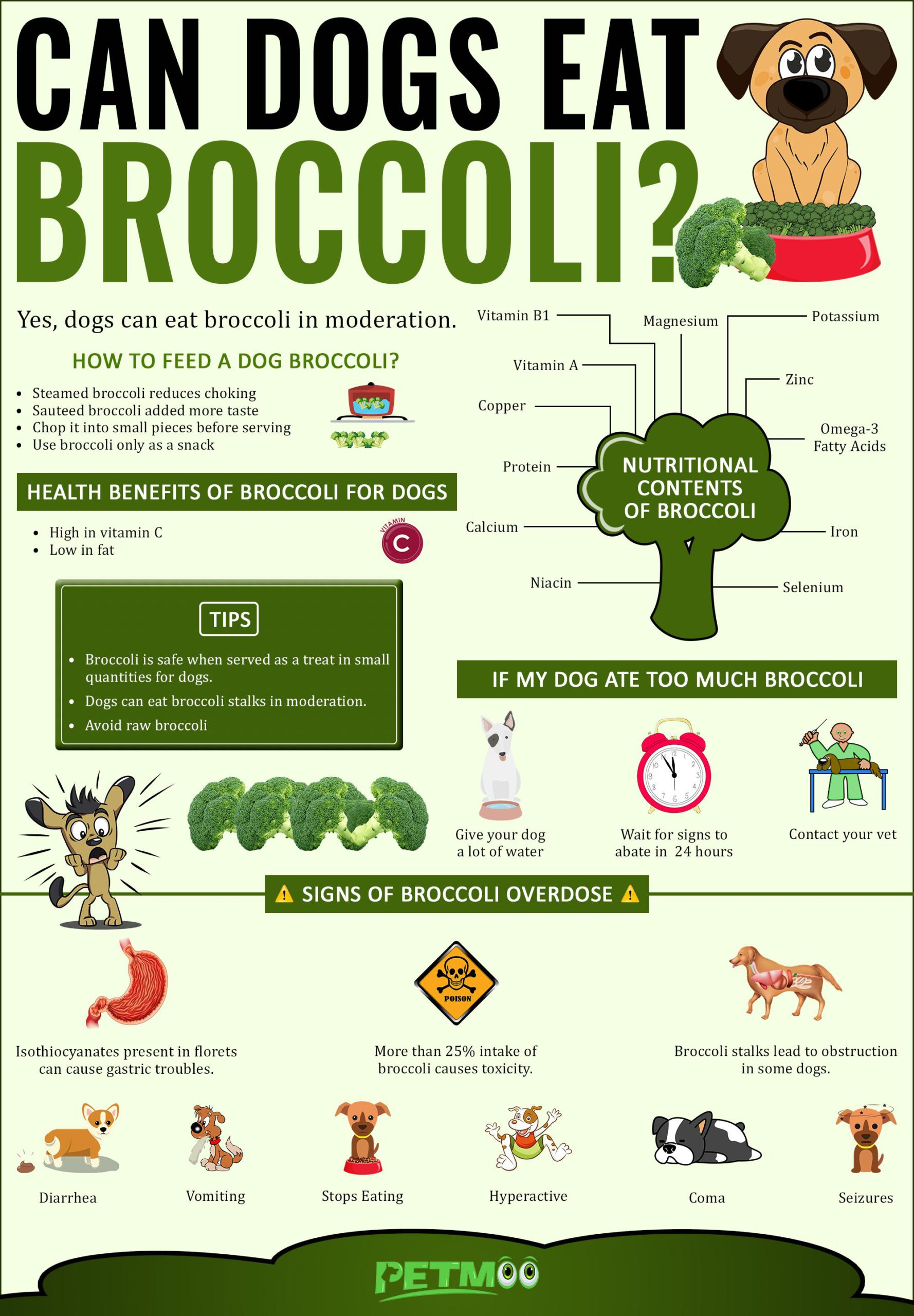 Can Dogs Eat Broccoli Infographics