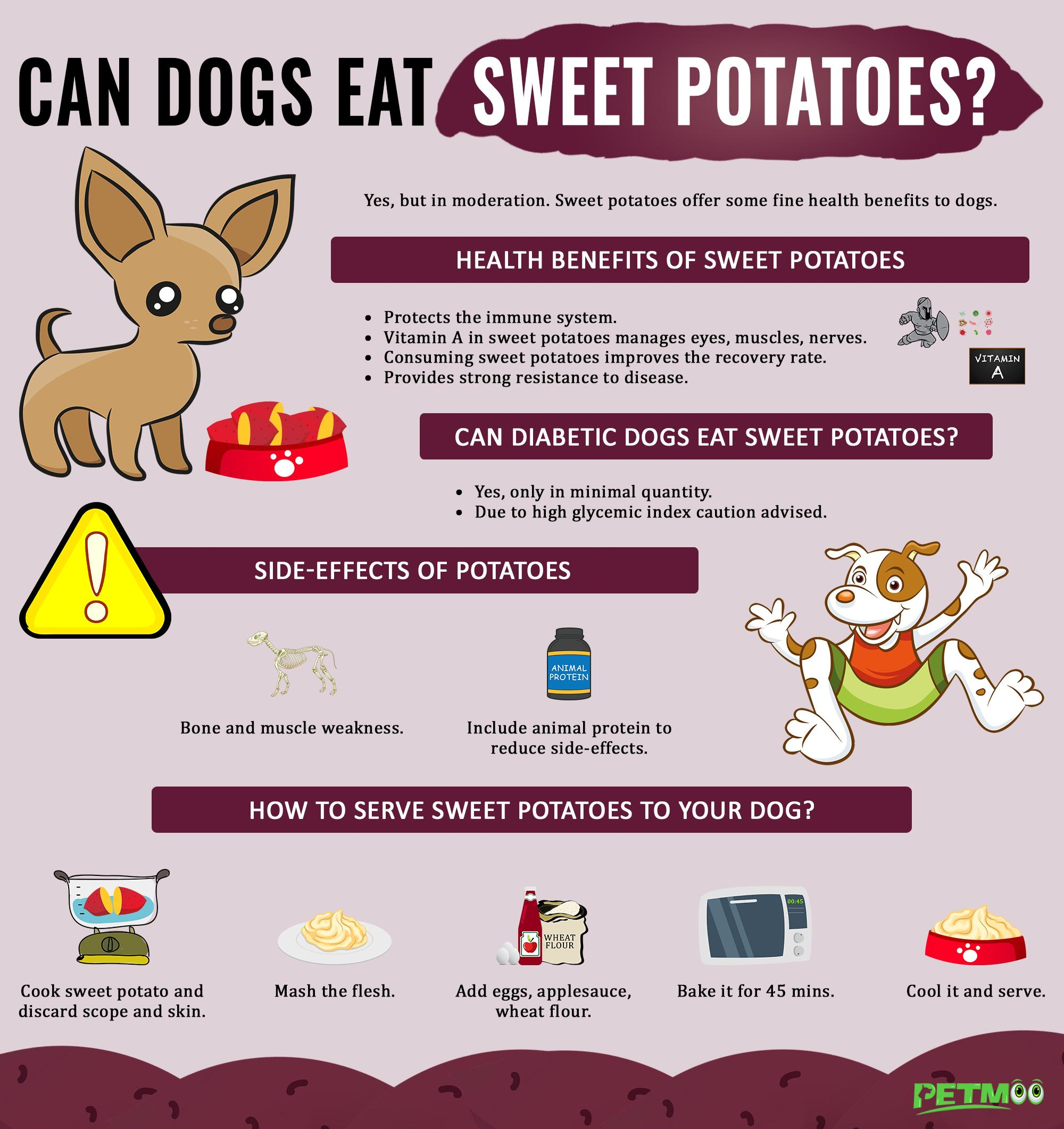 Can Dogs Eat Sweet Potatoes Infographics