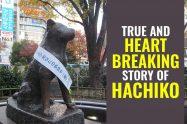 Hachiko Story