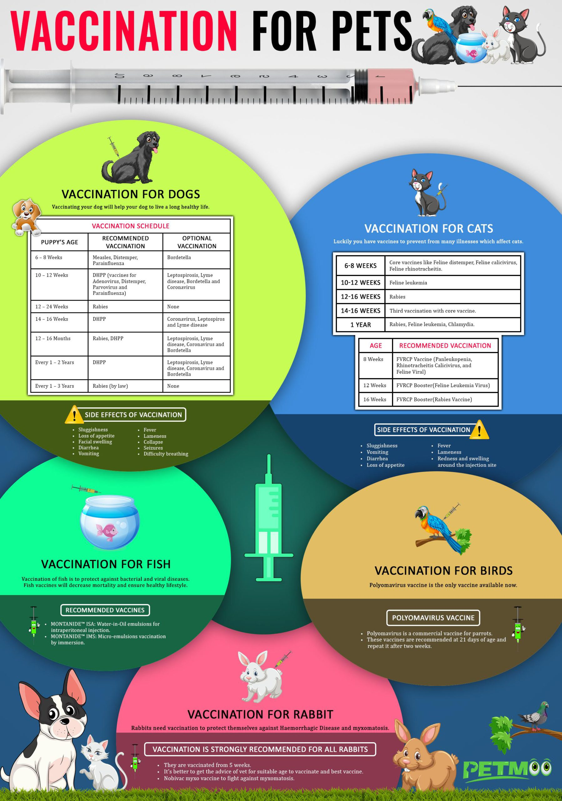 Vaccination For Pets Infographics