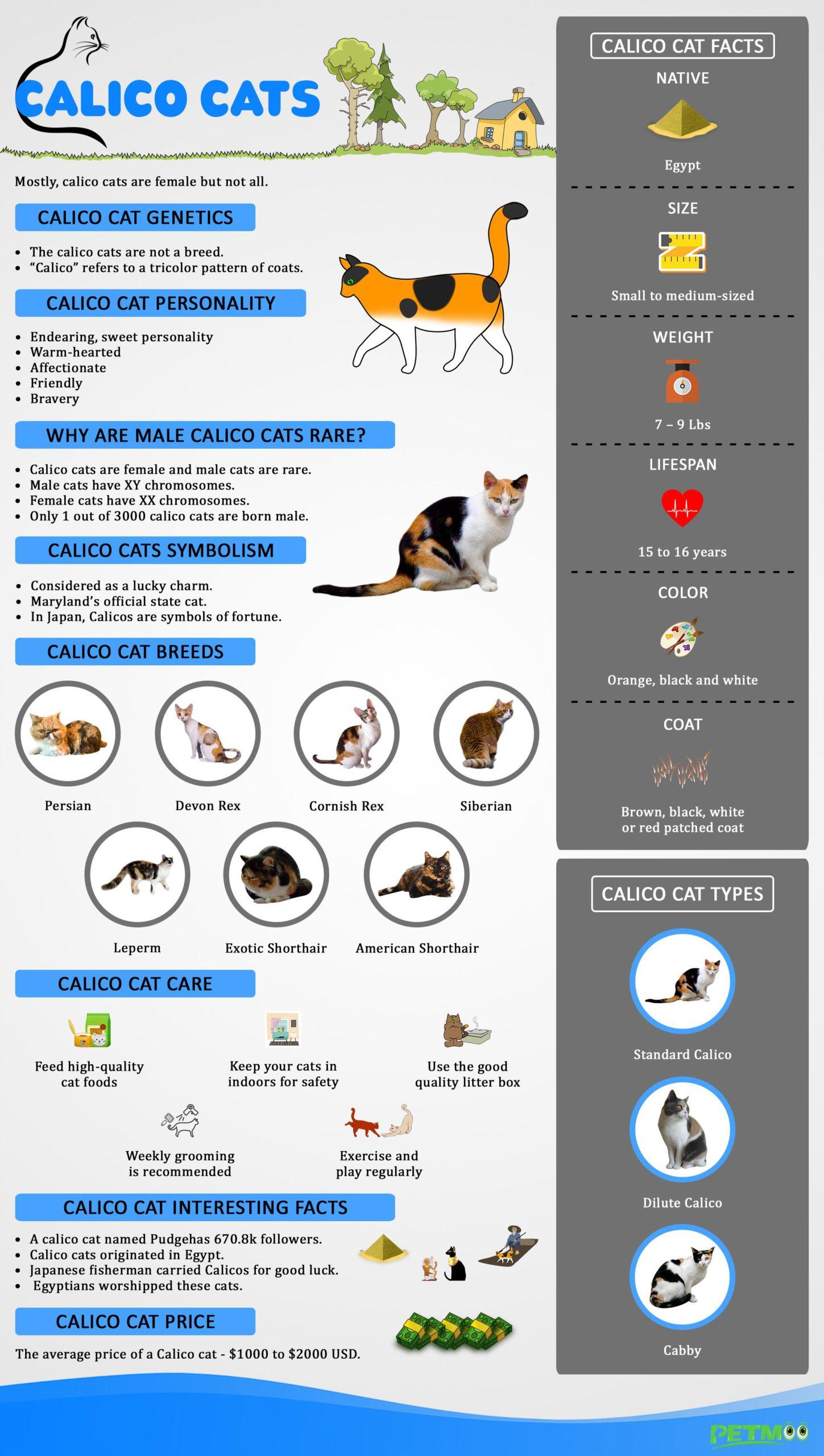 Calico Cats Infographics