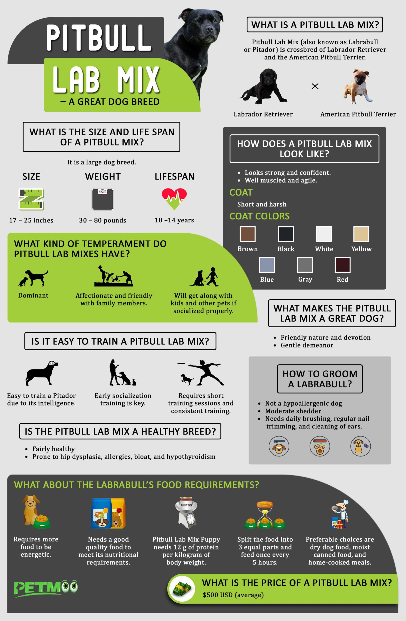 Pitbull Lab Mix Infographics