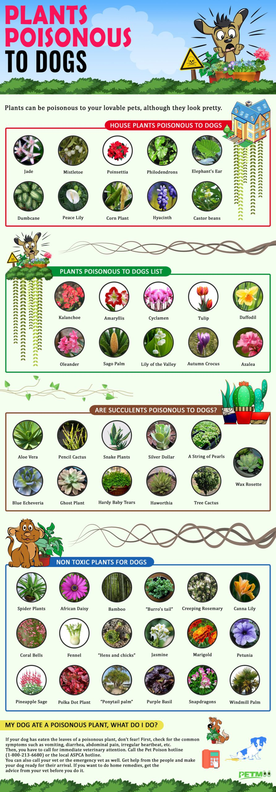 Plants Poisonous To Dogs Infographics