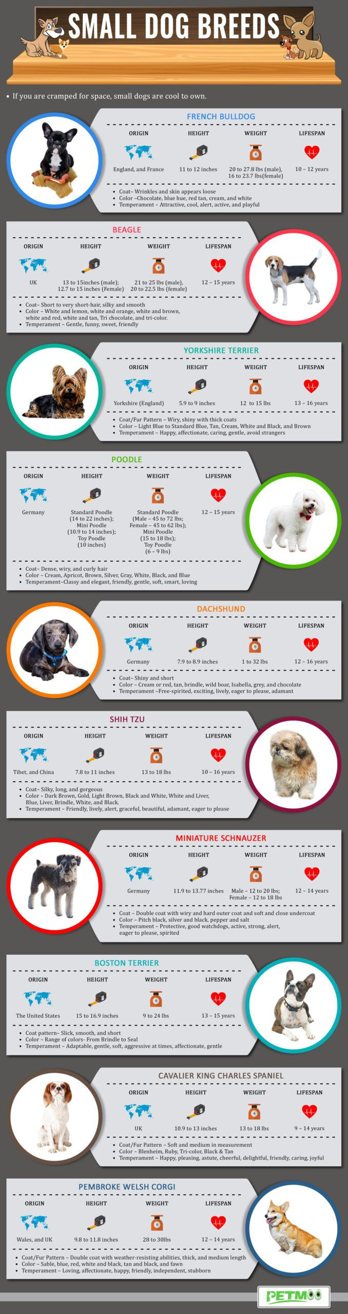 Small Dog Breeds Infographics