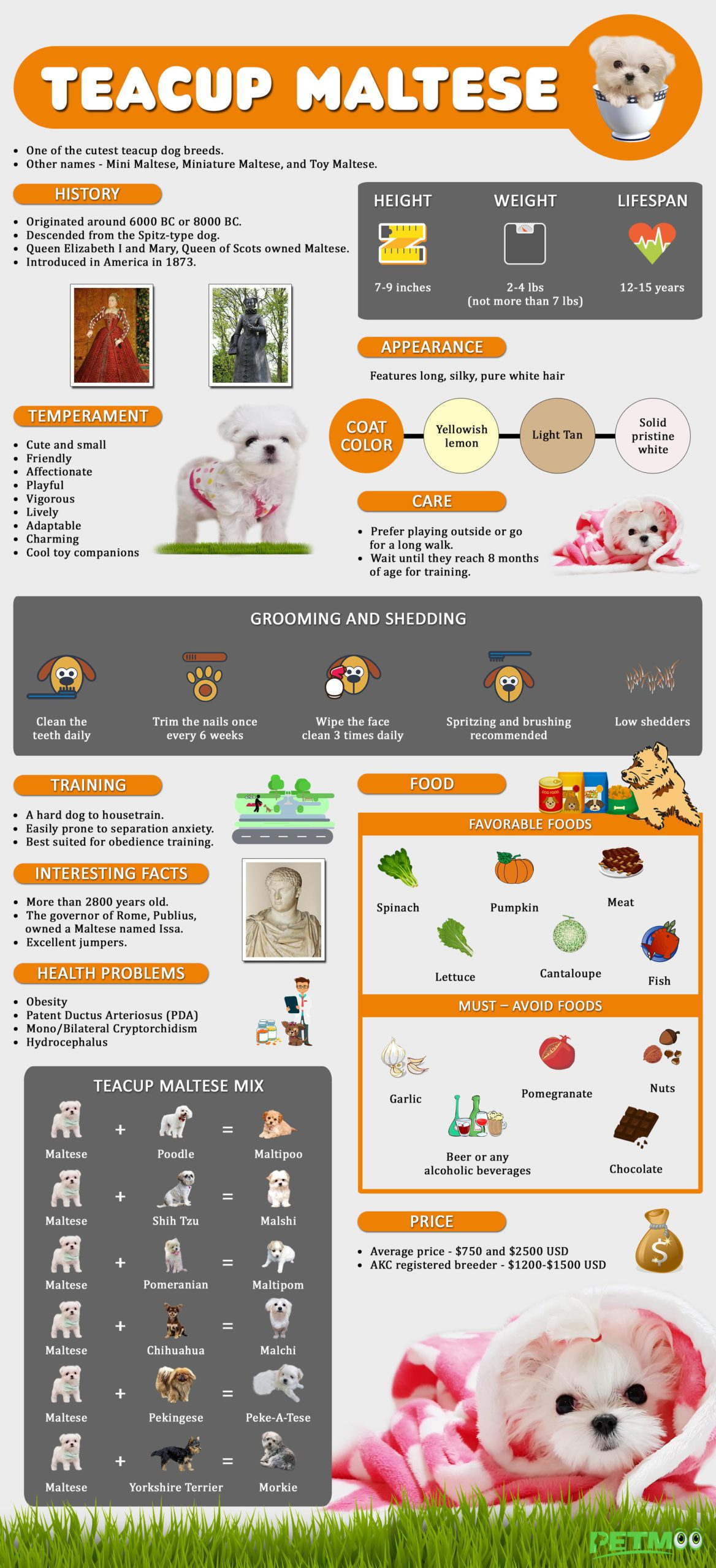 Teacup Maltese Infographic