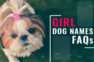 Girl Dog Names FAQs