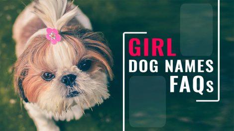 Girl Dog Names FAQs