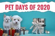 Pet Days Of 2020