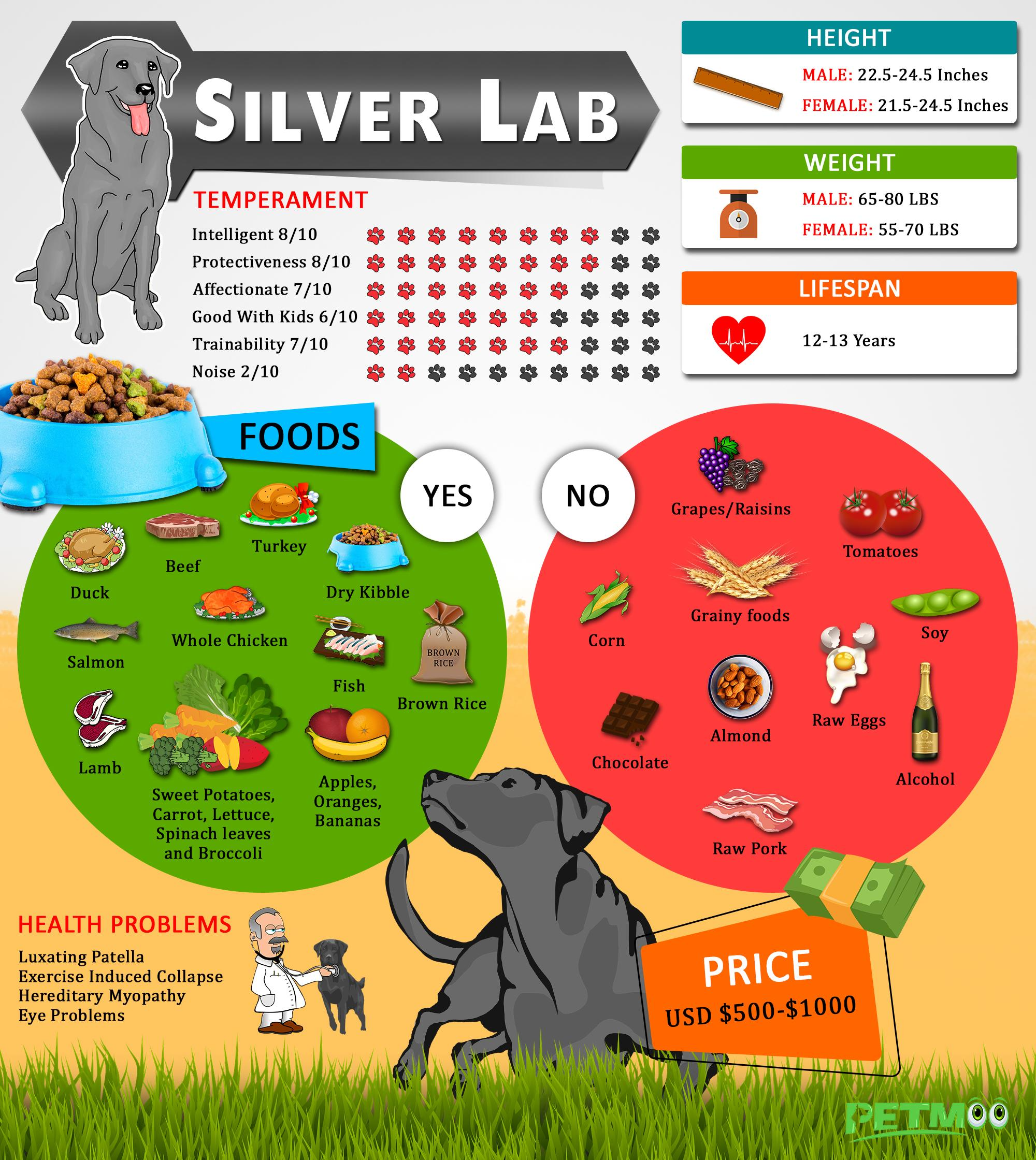 Silver Lab Infographic