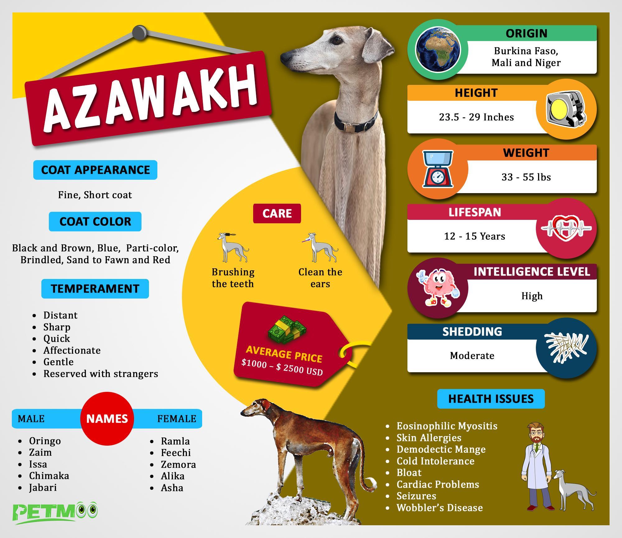 Azawakh Infographic