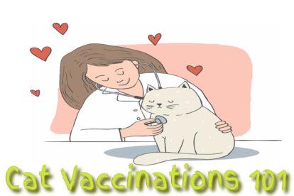 Cat Vaccinations 101