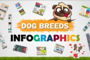 Dog Breeds Infographics
