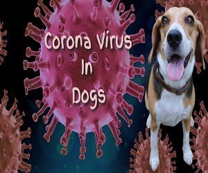 Corona Virus In Dogs