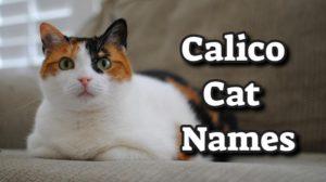 Calico Cat Names