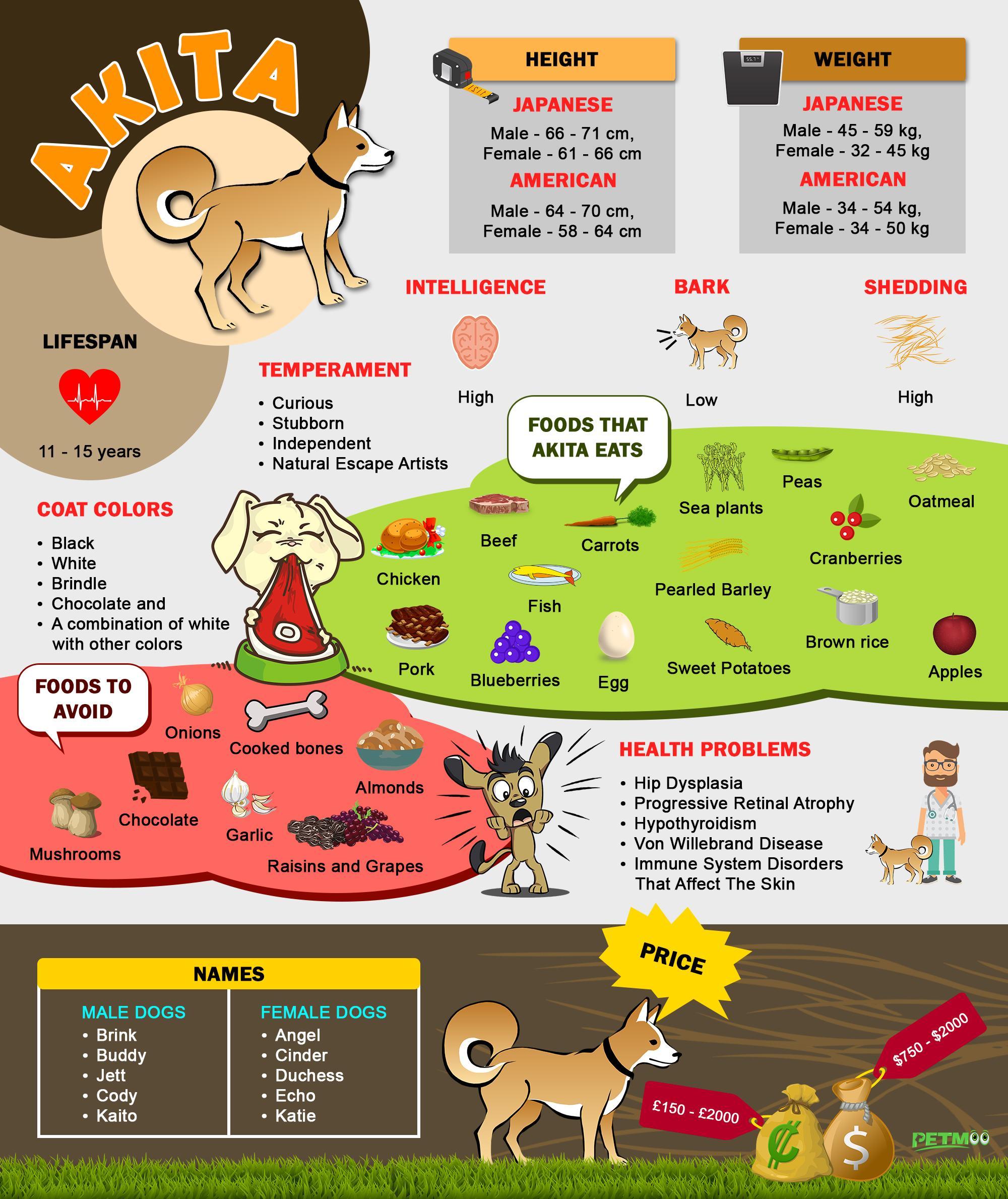 Akita Infographic