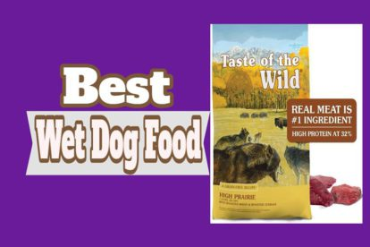 Best Wet Dog Food