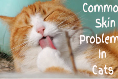 Common-Cat-Skin-Problems