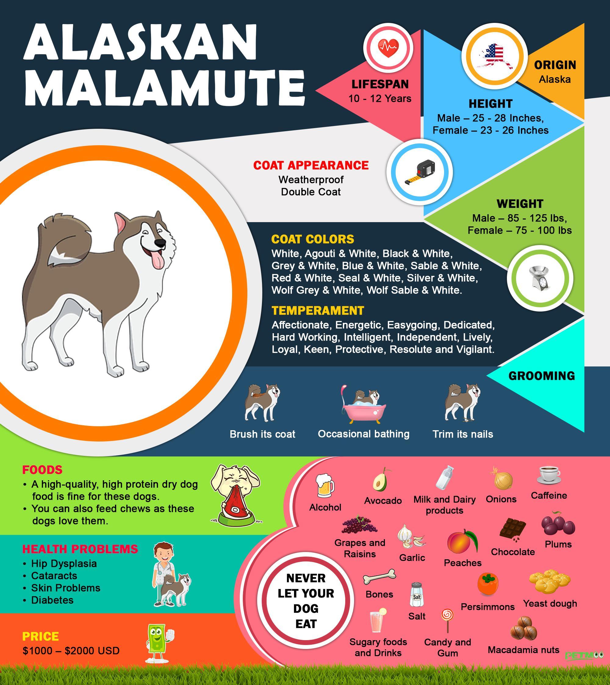 Alaskan Malamute Infographic