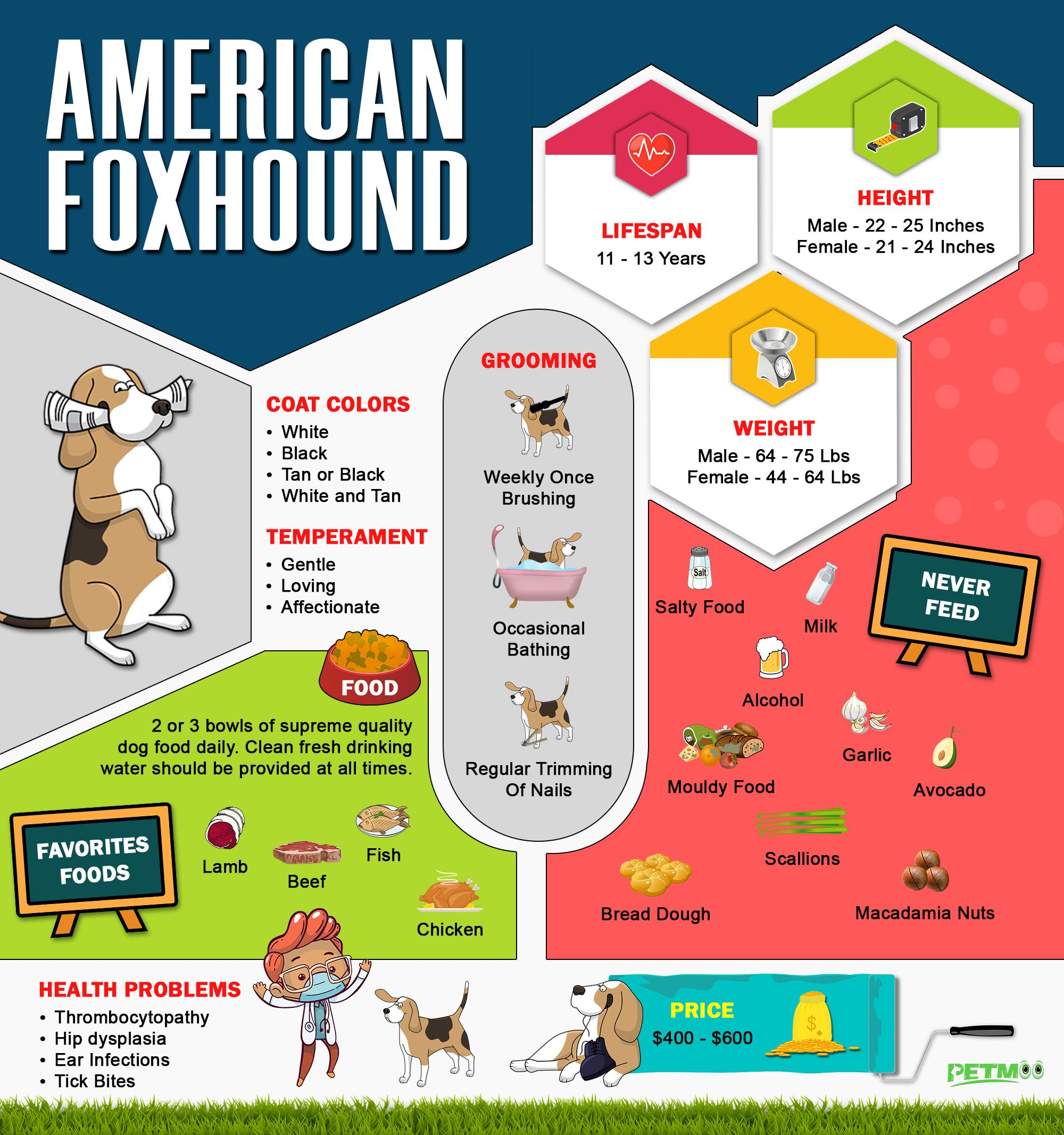 American Foxhound Infographic