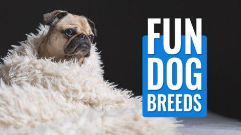 Fun Dog Breeds