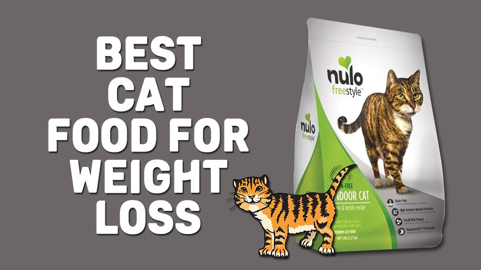 Best Cat Food For Weight Loss
