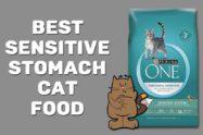 Best Sensitive Stomach Cat Food