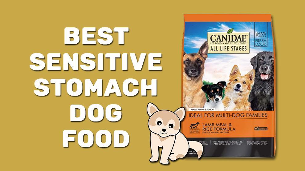 Best Sensitive Stomach Dog Food